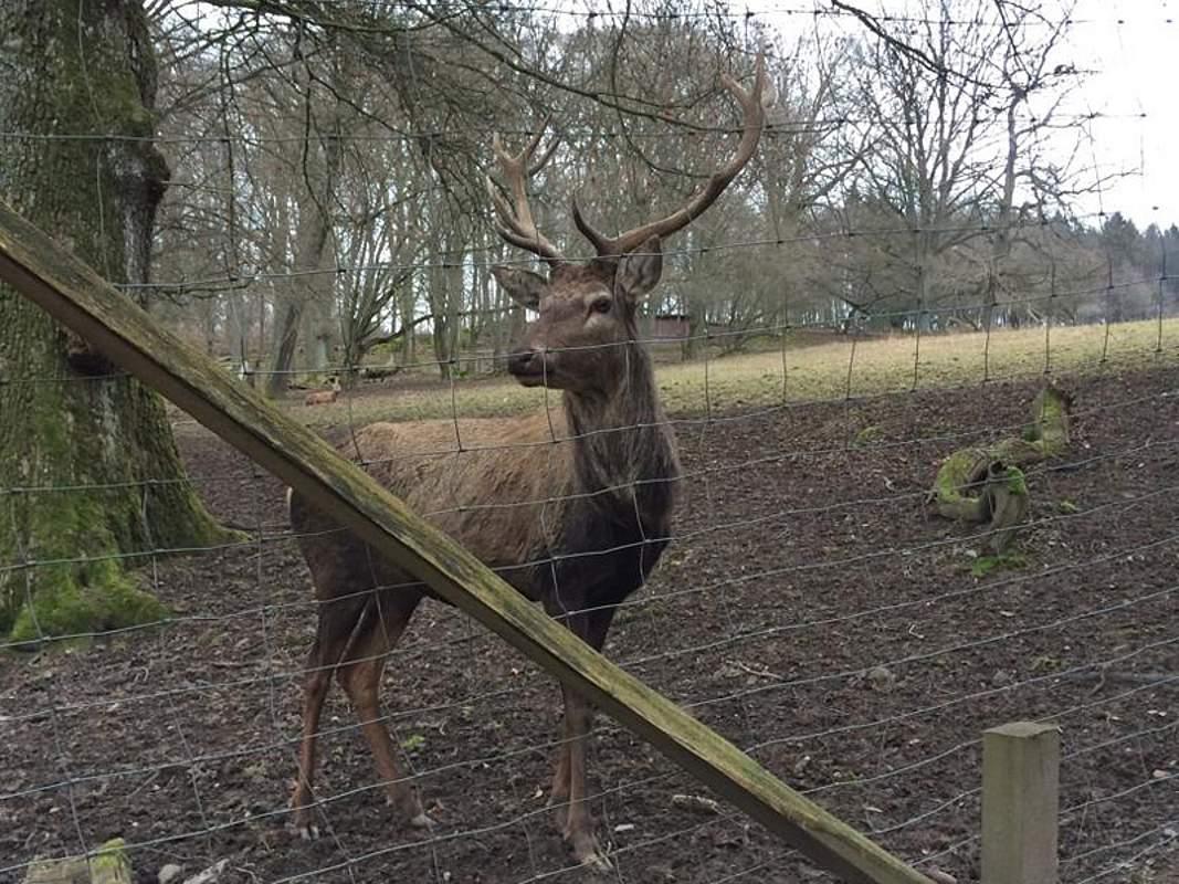 Wildpark Warstein: Hennesee Sauerland