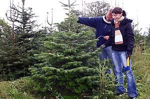 Weihnachtsbaum Selber Schlagen Sauerland.Weihnachtsbaumerlebnis Hennesee Sauerland